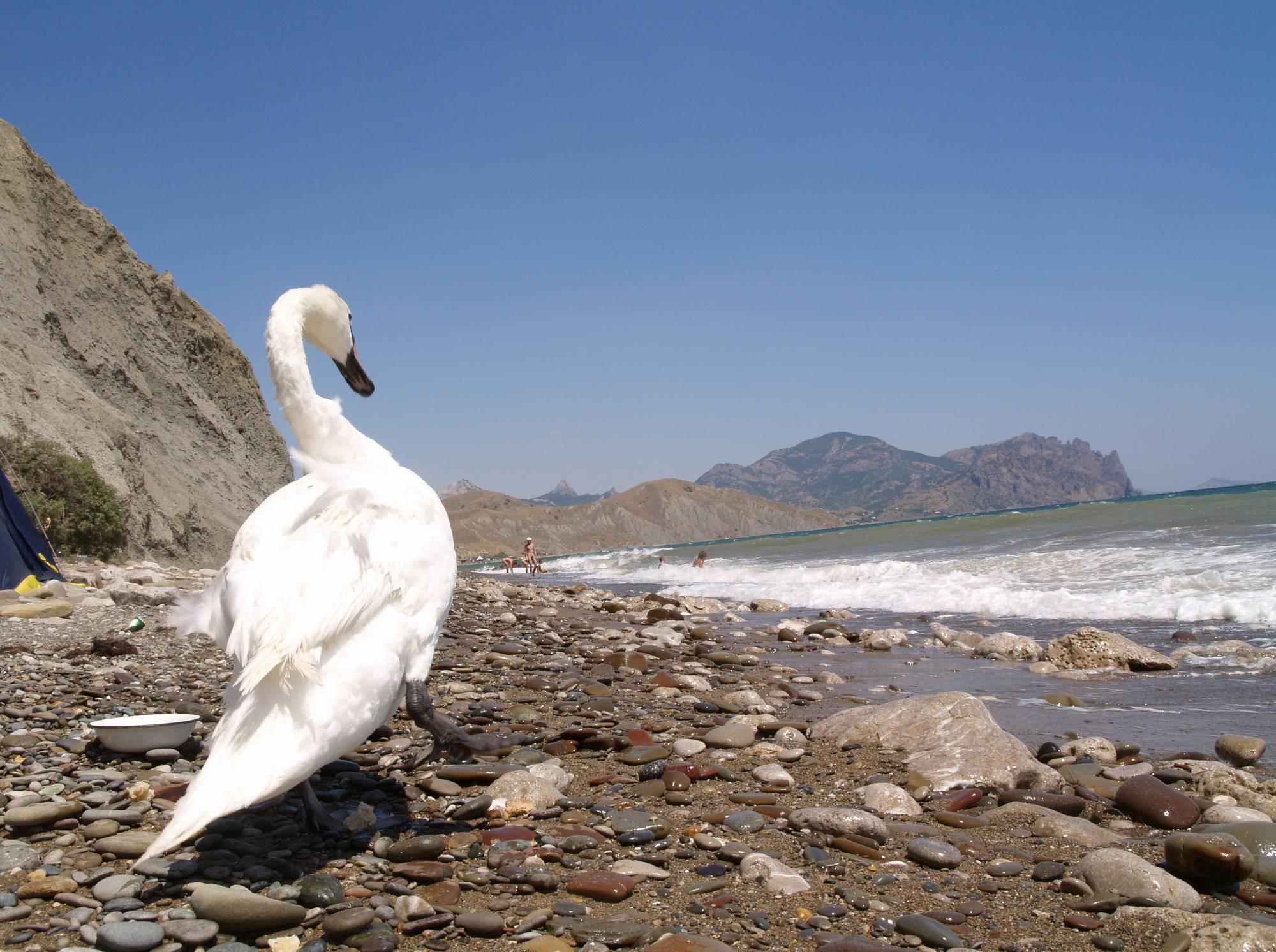 Nudist Photos Nude Ocean Swan Beauty - 1