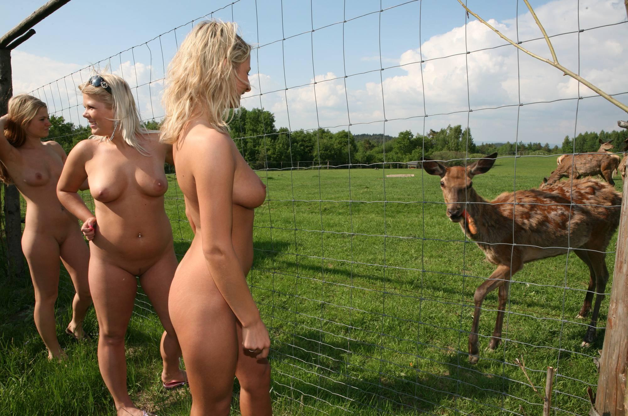 Woody Deer And Dog Field - 2